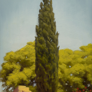 elias_cypress_tree